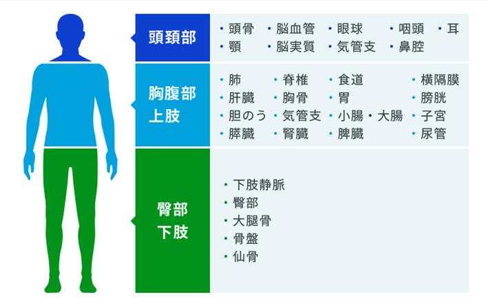 頭頚部:頭骨、脳血管、眼球、食道、顎、脳実質、気管支/胸腹部上肢:肺、胸骨、肺血管、気管支/臀部下肢:下肢静脈、臀部、大腿部